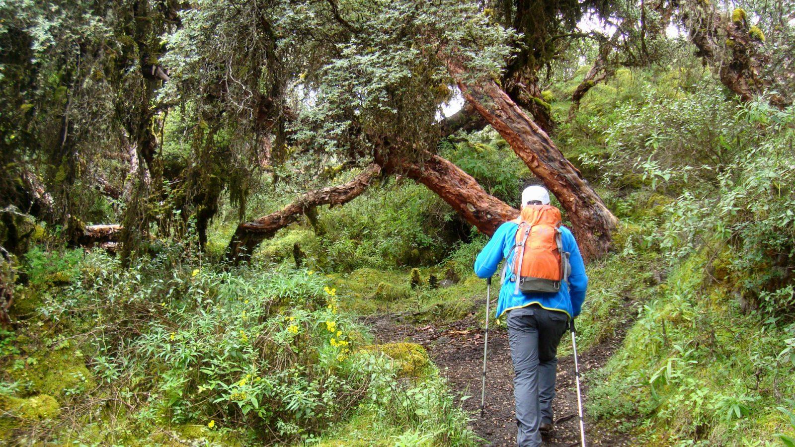 Hike to the Yanacocha Lake cusco by inka trail trek