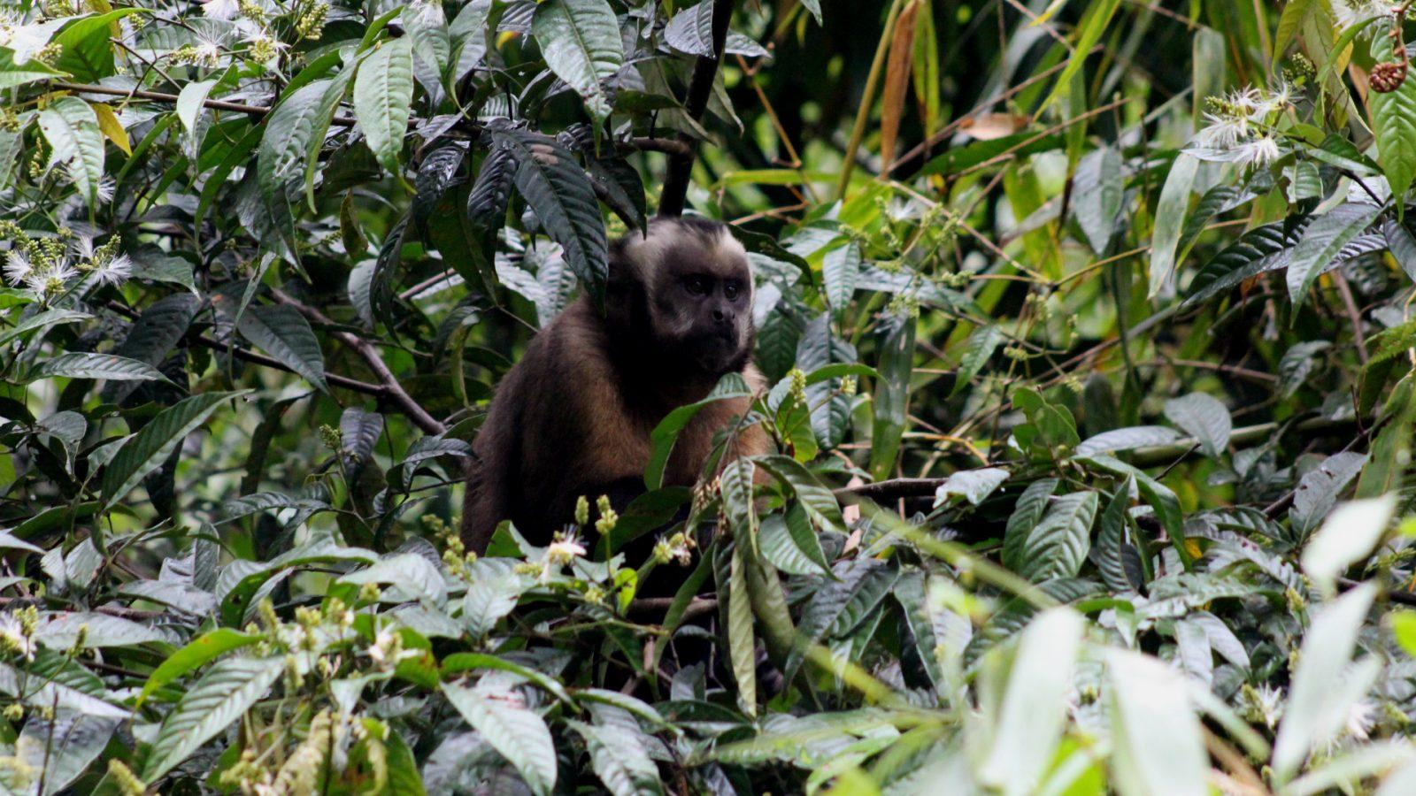 manu jungle trip by inka trail trek