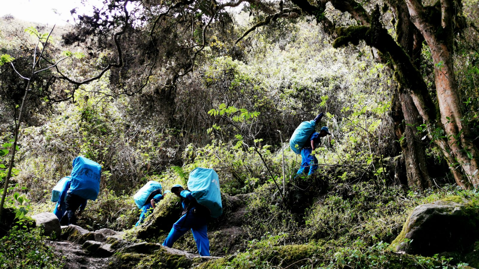 porters on the inca trail by inka trail trek